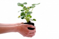 Fertilizer: do plants need it and is it natural?